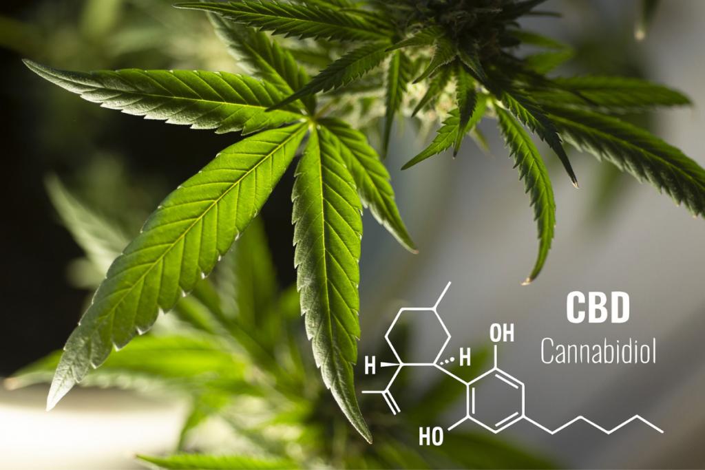 cbd (κανναβιδιόλη) και αυτοάνοσα, cannabis street